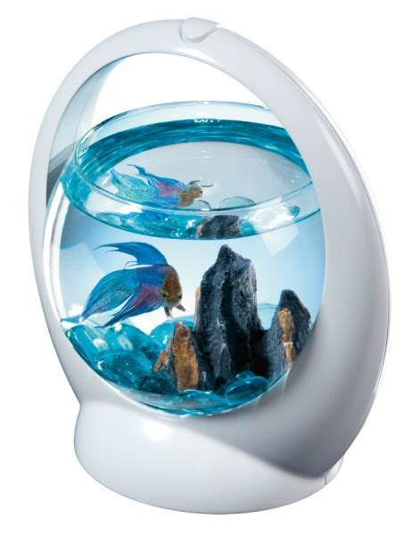 aquarium pour betta combattant aquarium pour betta combattant tetra betta ring animaloo
