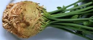 Culture Celeri Branche : recettes de c leri id es de recettes base de c leri ~ Melissatoandfro.com Idées de Décoration