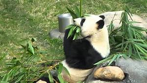 ~Cute Panda Bear Eating a Healthy Lunch~ - YouTube