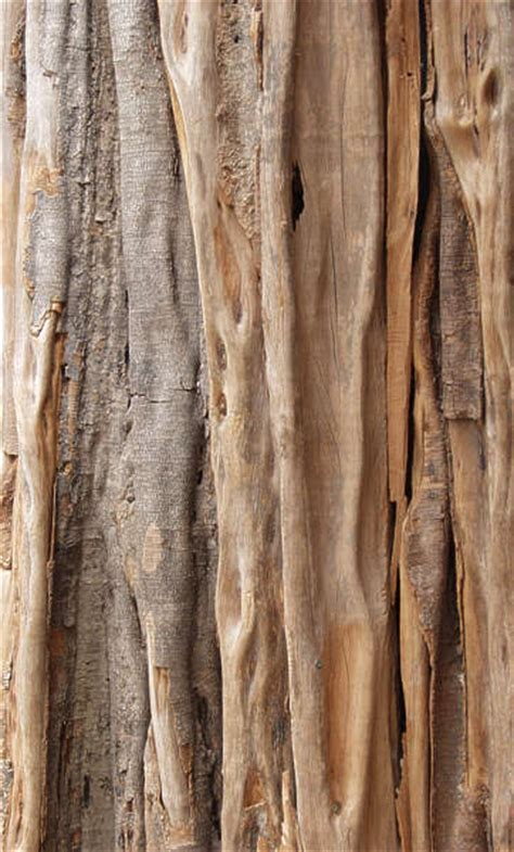 BarkTropical0003   Free Background Texture   wood bark