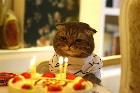 cat birthday birthday cat is depressed