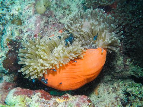 polynesia french islands society reef slideshow dscn1035 coral
