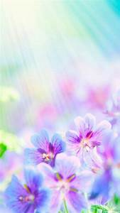 1080x1920 Beautiful Colorful Flowers Wallpapers HD
