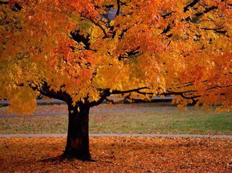 E? autunno, gli alberi sono in festa!   Tina Festa