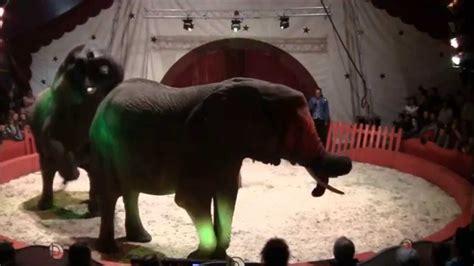 cirque achille zavatta direction teddy dubois youtube
