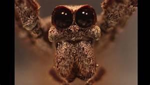 Wie Sieht Ein Hummelnest Aus : diese spinne sieht aus wie ein alien ~ Yasmunasinghe.com Haus und Dekorationen