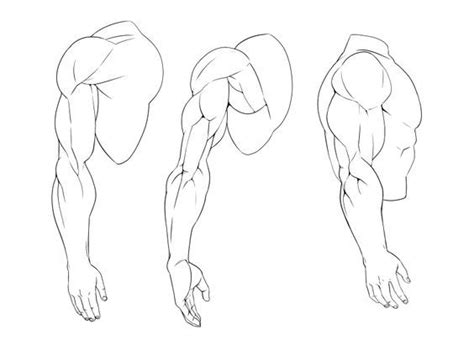 strong tutorials  learning   draw anime muscles