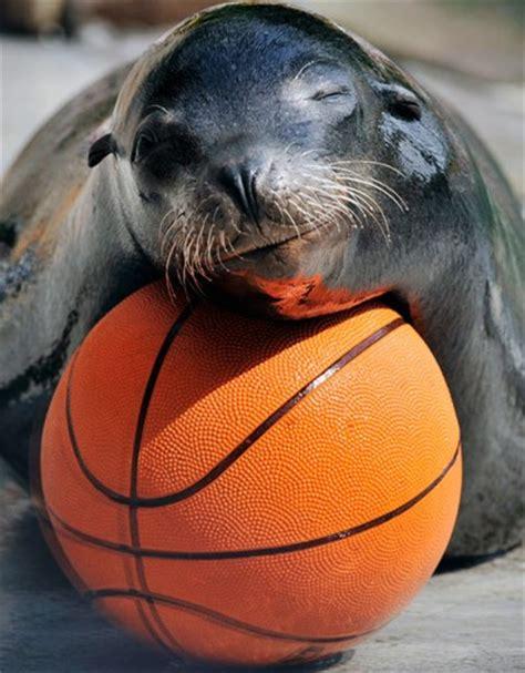 animals basketball