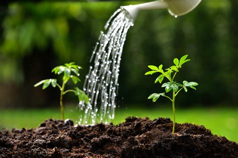 water plants mitigating the effects of climate change on water scarcity agronigeria