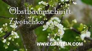 Wann Soll Man Vertikutieren : obstbaumschnitt f r zwetschke im j nner und februar youtube ~ Orissabook.com Haus und Dekorationen