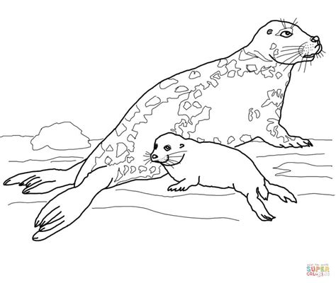 Gray Seal Mother And Baby Coloring Page Free Printable