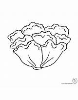Lettuce Coloring Pages Fresh sketch template