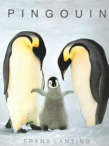 Pingouin Sur La Banquise : la reproduction des pingouins sur la banquise la reproduction des pingouins ~ Melissatoandfro.com Idées de Décoration