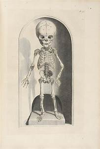 133 best Morbid and creepy images on Pinterest | Anatomy ...