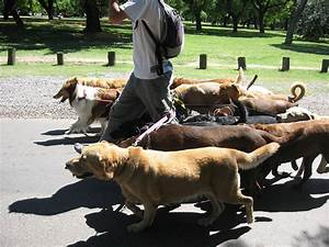 dog walking wikipedia With puppy dog walker