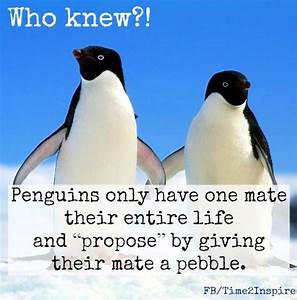 """Penguin love quote via """"Time 2 Inspire"""" at www.Facebook ..."""