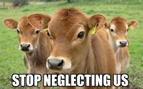 Calves Meme - how to build your calf muscles supplement centre
