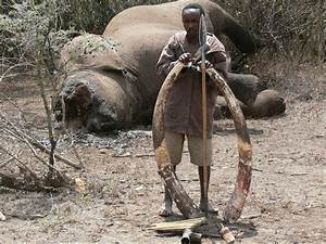 Illegal Animal Poaching | This WordPress.com site gives a ...