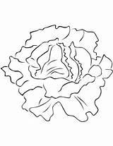 Lettuce Coloring Lechuga Colorear Colorare Printable Verduras Vegetales Disegni Insalata Dibujo Imagenes Dibujos Disegno Hojas Dibujar Pintar Hoja Bambini Vegetables sketch template