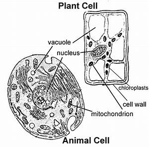 animal cell to label With plant cell typical plant and animal cells diagram plant cell structure