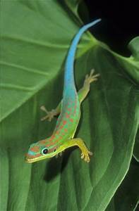 Madagascar, Blue tail and I want on Pinterest