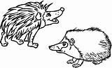 Hedgehog Coloring Printable Drawing sketch template