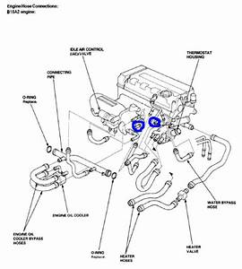 Throttle Body Hose - Honda-tech