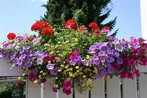 Wann Balkon Bepflanzen : beetblumen balkonblumen g rtnerei fischer burglengenfeld g rtnerei fischer burglengenfeld ~ Frokenaadalensverden.com Haus und Dekorationen