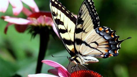 Nature Butterflies Wallpapers Hd Desktop And Mobile