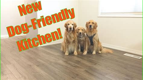 pergo flooring for pets pergo flooring reviews dogs meze blog