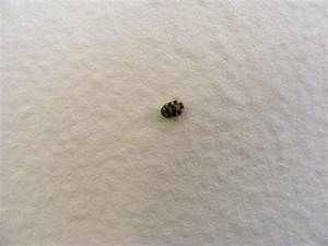 little black and white bugs in bedroom wwwindiepediaorg With white bugs in bathroom