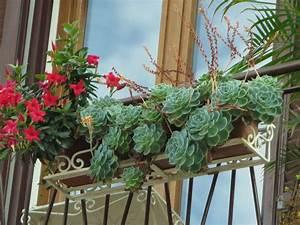 Hängepflanzen Für Balkonkästen : winterharte dickblattpflanzen tipps und tricks f r haus ~ Michelbontemps.com Haus und Dekorationen