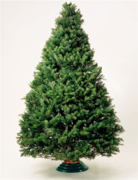 taxi driver nabs christmas tree as a quot ransom quot for fare