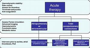 Management Of Atrial Arrhythmias In Fontan Patients  Ple