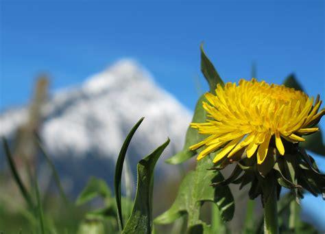 printemps si鑒e social télécharger fonds d 39 écran fleur de printemps gratuitement