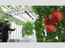 This Is The Future 14 HighTech Farms Where Veggies Grow