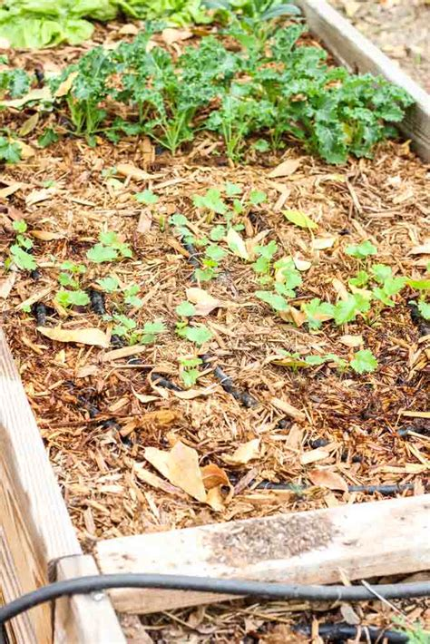 Keep Weeds Out Of Garden by Garden Weeds How To Keep Weeds Out Of The Garden For