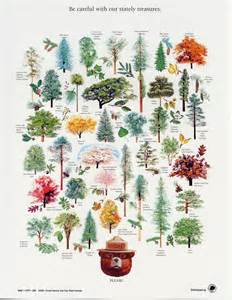 vintage cing illustrations this a one i had to really think and remember tree names