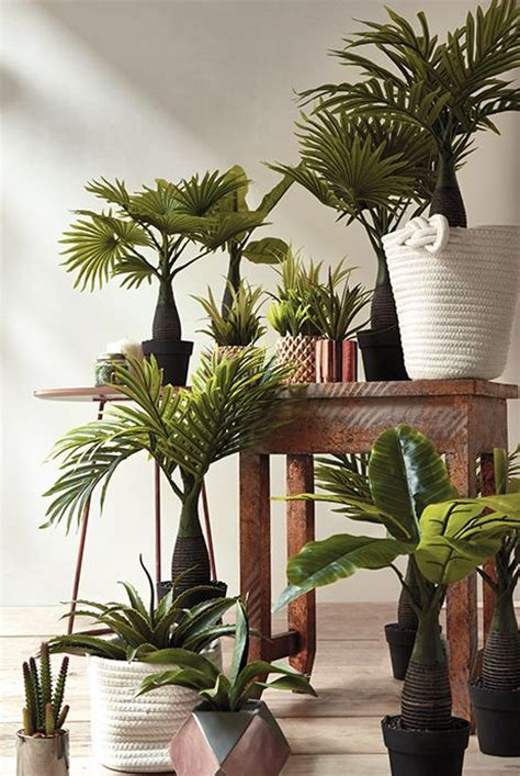 Fausse Plante Exterieur Fausse Plante Exterieur Fausse Plante Verte Fausses Plantes Vertes Brasserie Forest Fausse