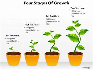 Four Stages Of Growth Shown By Plants Growing In Pots