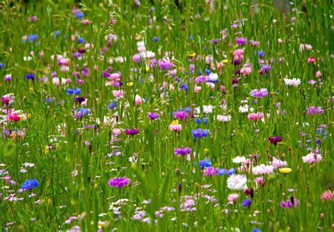 wur bloemen gedijen in gefragmenteerde landschappen wur