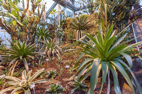 Botanischer Garten Berlin Herbarium by Apothekerg 228 Rten Seite 3 3 Botanischer Garten