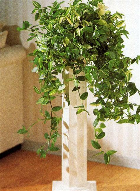 cheap plants cheap ideas for eco friendly interior decorating with tradescantia house plants