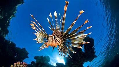 Underwater Wallpapers Ocean Fish Sea Epic Marine