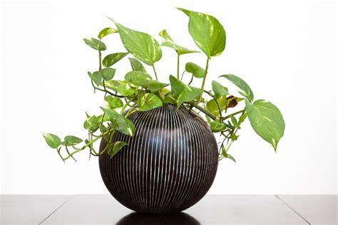 plante de bureau feng shui 3 houseplants to help you feng shui your home for