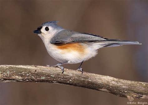 le petit oiseau de toutes les couleurs 192 d 233 couvrir