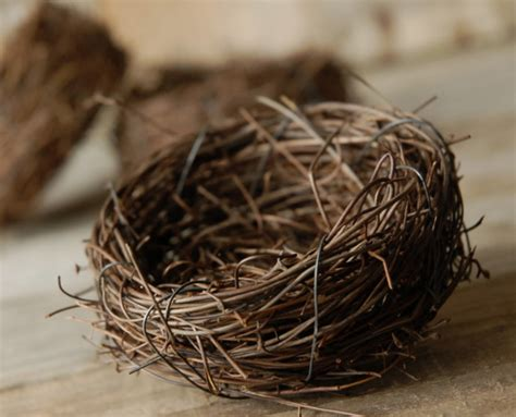 pictures of bird nests 9 3 inch natural twig tiny bird nests