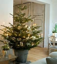 potted trees make every room festive the stir