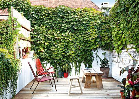 plantes dans la chambre 10 astuces pour se protéger des regards au jardin