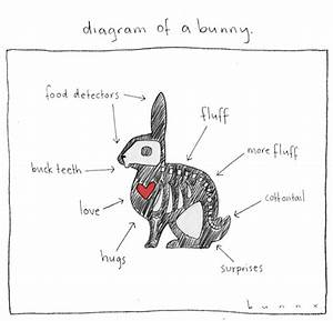 diagram of a bunny by abunnydance on deviantart With rabbitdiagram
